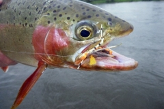 phoca_thumb_l_edited600webcutbow1